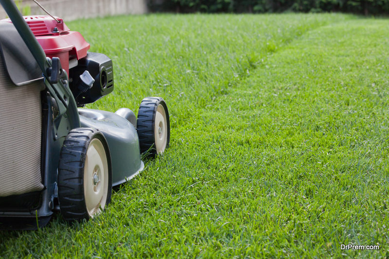 Mow Newly Sodded Grass