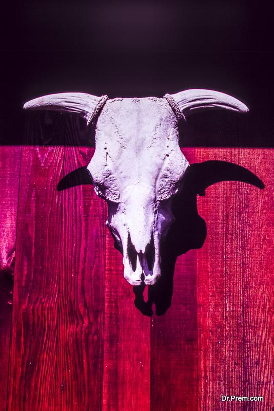 vintage cow skull on the door