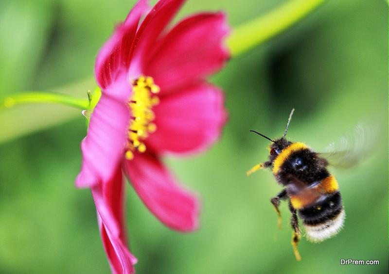 Bees in Your Garden