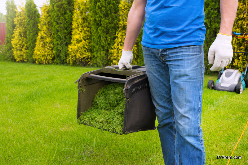 lawn care tips for Dallas homeowners