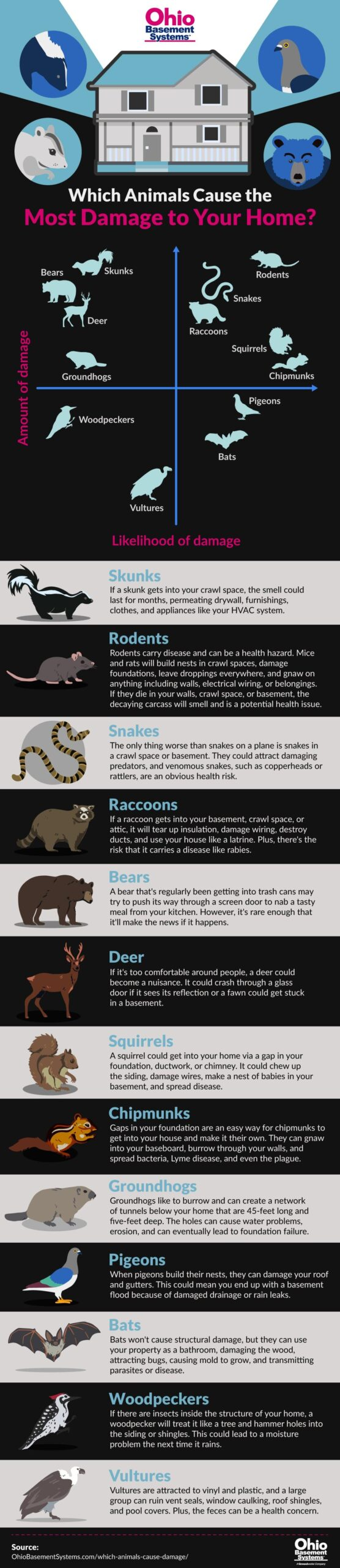 which-animals-cause-damage-infographic-ohio-basement-systems