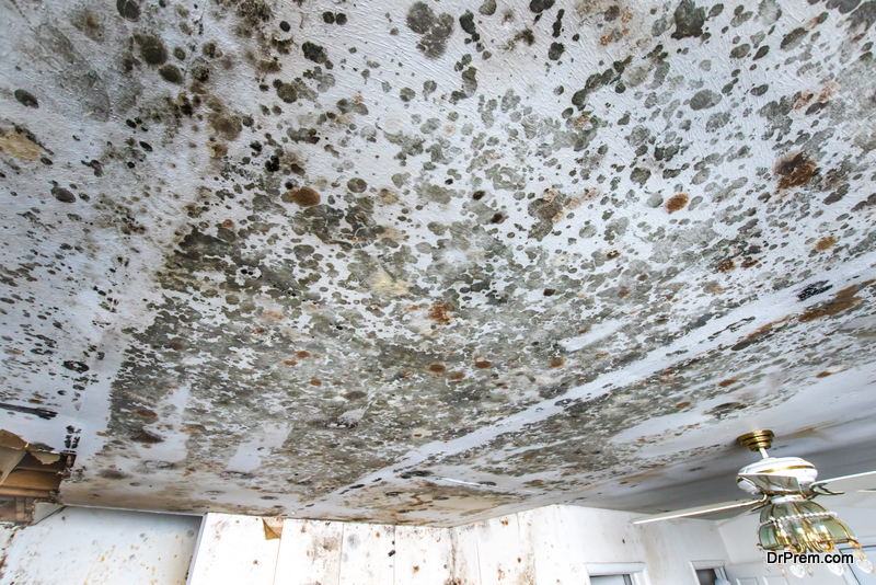 mold-on-the-ceiling